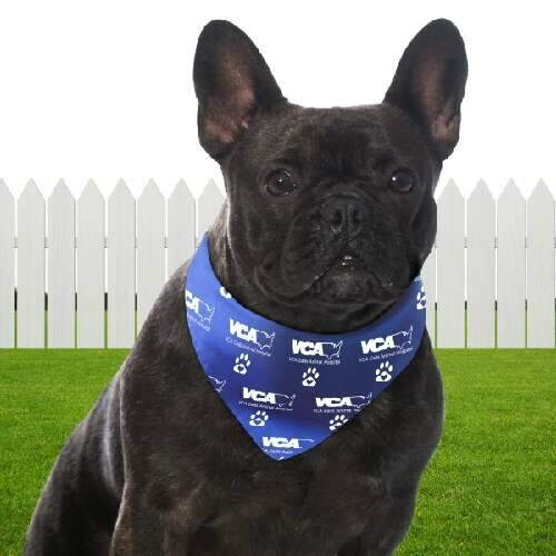 bandoggies pet bandana- large